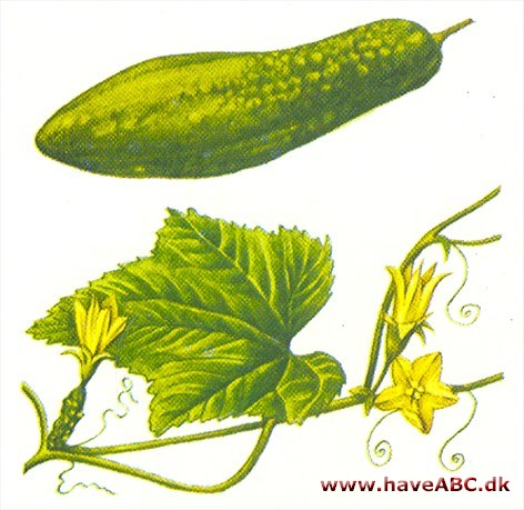 drueagurk planter