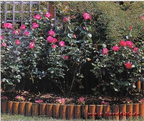blomster ved jorden ligner roser
