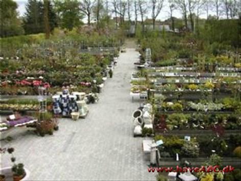 dybvad plantecenter