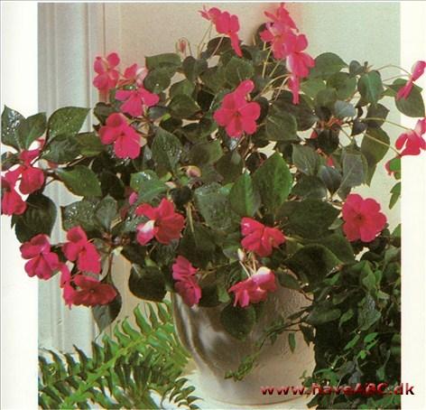 flittiglise blomst