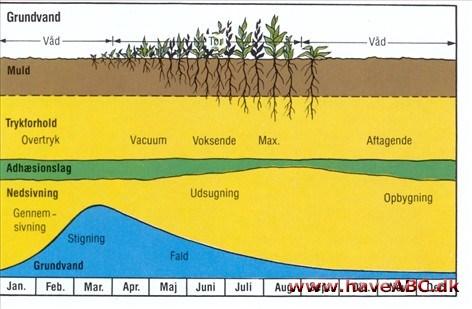 Grundvand dybde