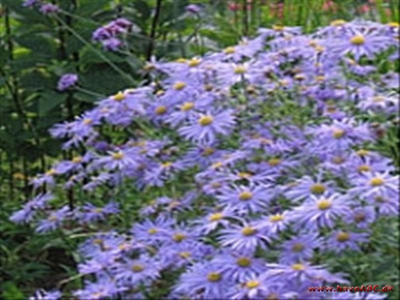 Have/blomster/planter/buske/træer   alt på et sted