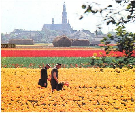 som er eskorte tulipan