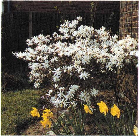 Haven i april   haveabc.dk