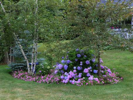 Lilys have er magisk for Hydrangeas